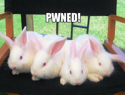 rabbits pwned