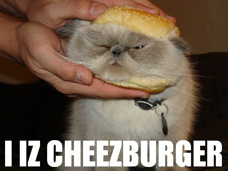 cat is a cheeseburger