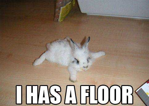 bunny rabbit has a floor