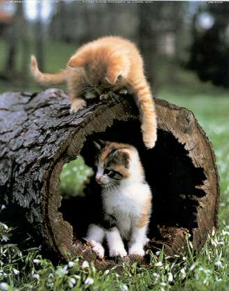 kittens playing in log