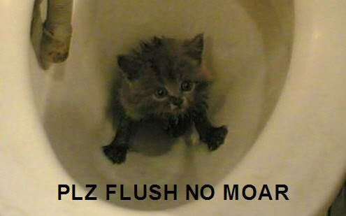 please flush no more kitten in toilet