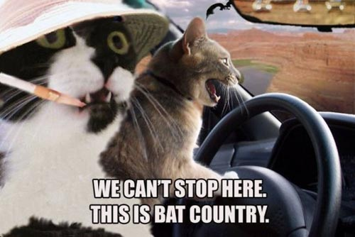we can't stop here this is bat country