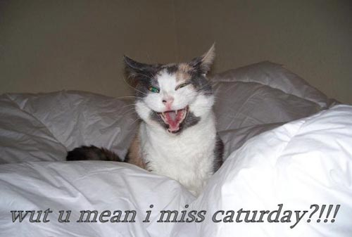 what you mean i missed caturday?