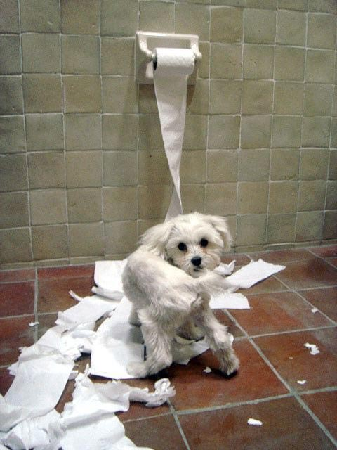dog destroys toilet paper