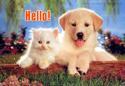 hello puppy and kitten