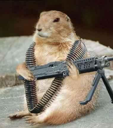 groundhog with machine gun