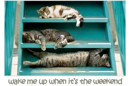 cats wake me up when it's the weekend
