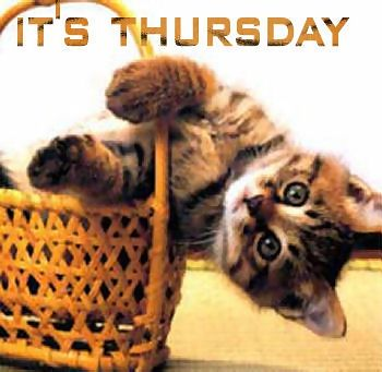 it's thursday kitten