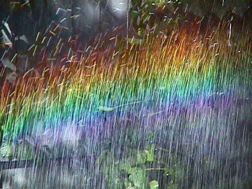 rainbow in garden