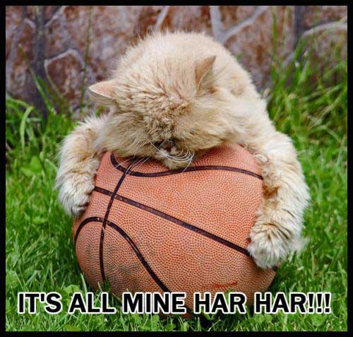 cat loves basketball