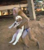 monkey running with dog