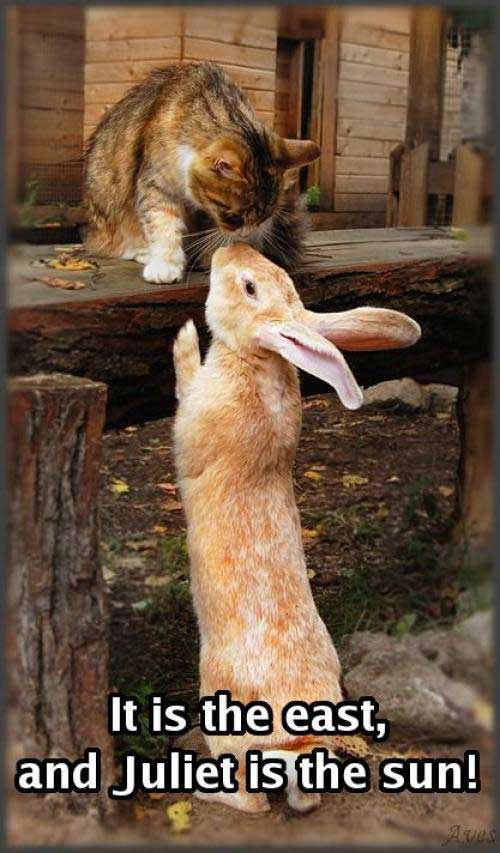 bunny rabbit sniffing cat - juliet is the sun