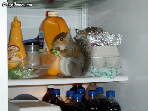 squirrel in the fridge