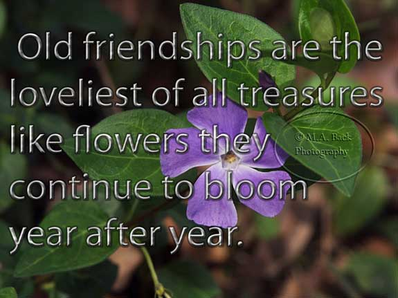 old friendships are the lovelist of all treasures like flowers they continue to bloom year after yea