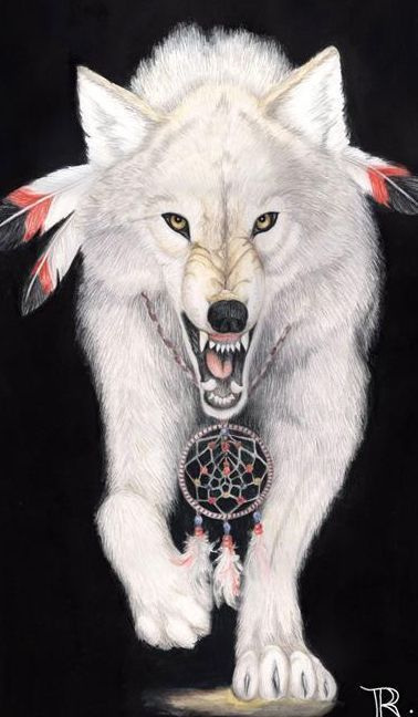 native american wolf