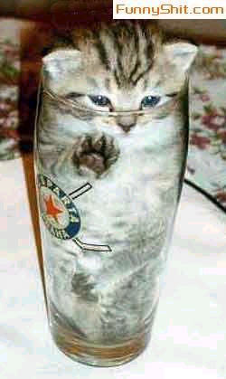 kitten inside glass