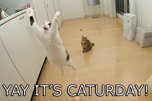 yay it's caturday saturday