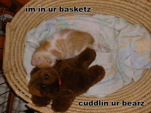 im in your basket cuddling your bears