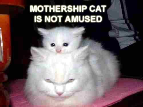 mothership cat is not amused