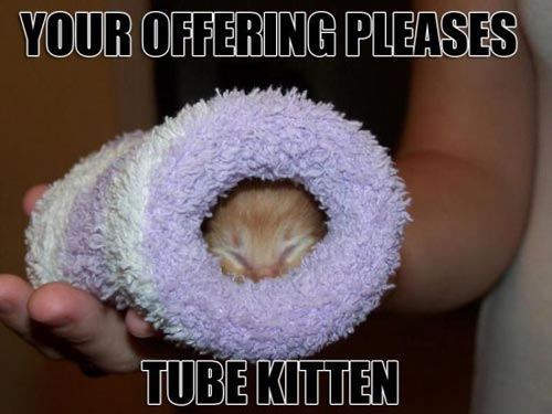 your offering please tube kitten