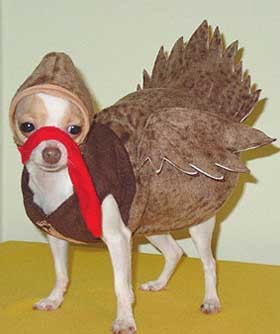 turkey dog