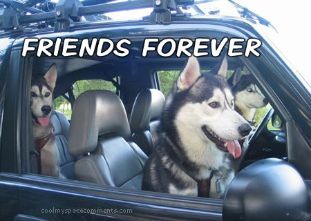 friends forever dogs driving