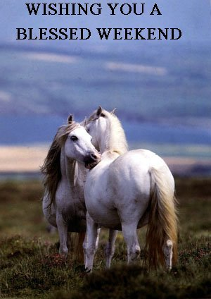wishing you a blessed weekend - horses