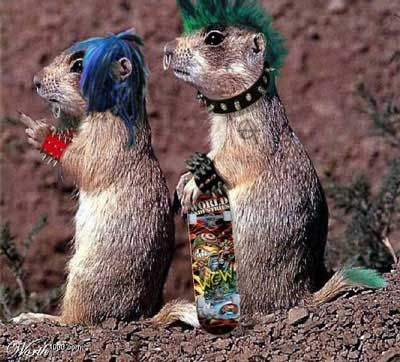 punk rock squirrels with skateboard