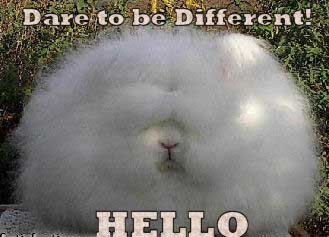 dare to be different hello
