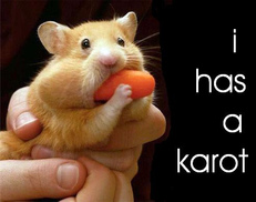 mouse has a carrot