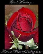 good morning have a wonderful day rose