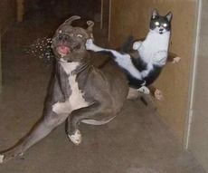 cat and dog fighting