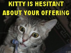 kitty is hesitant about your offering