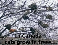 in canada cats grow in trees