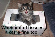 when out of tissues a cat is fine too