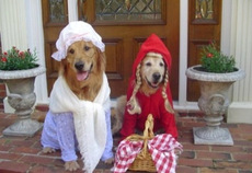 little red riding hood dogs
