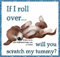 if i roll over will you scratch my tummy