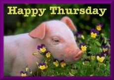 happy thursday pig