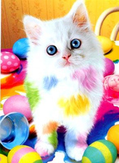 colorful easter cat