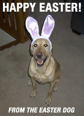 happy easter from the easter dog