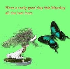 have a really good day this monday butterfly